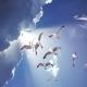 Neuanfang Engel